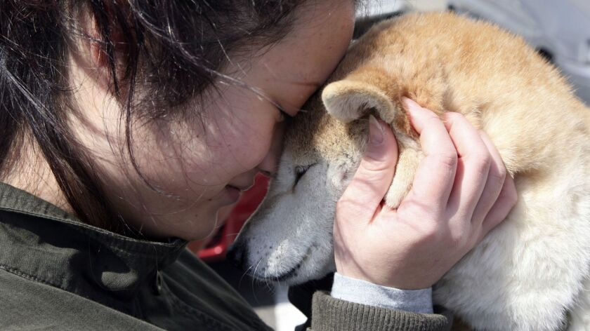 17-year-old evacuee Shoko Igarashi, hugs