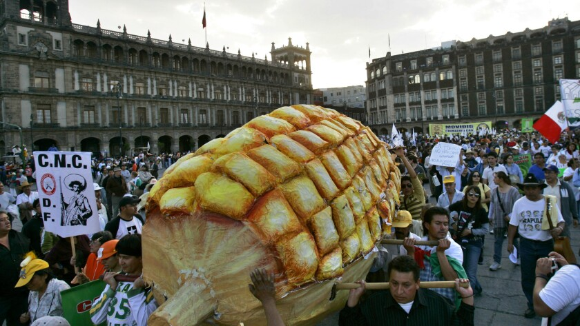 In 2008, demonstrators in Mexico City carried a homemade replica of a corn during a mass protest against the NAFTA-mandated removal of tariffs on agricultural imports.