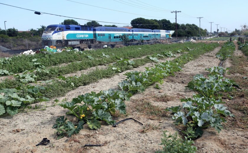 Squash, tomatoes and strawberries are grown on land donated to Carlsbad for a future park.