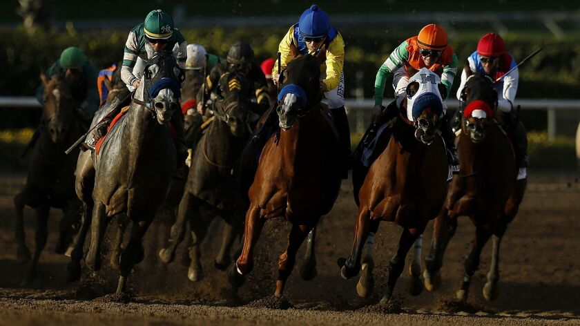 Horses head down the stretch during the San Antonio Stakes at Santa Anita on Dec. 26. Twenty-one horses have died since the start of the track's winter meet.
