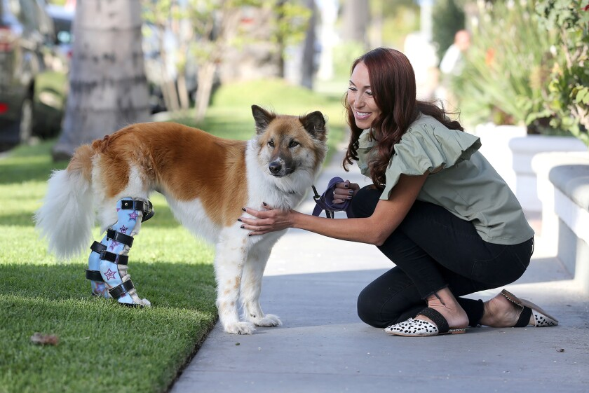 With the help of prosthetic legs, Frida walks along a sidewalk with her owner Dr. Lisa Chong.