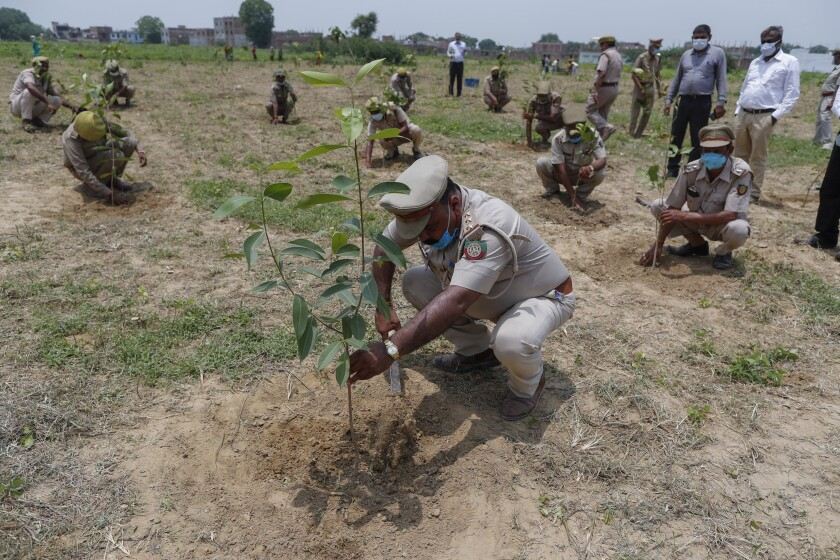 Indian forest department officials plant saplings as part of an annual tree plantation campaign on the outskirts of Prayagraj, in northern Uttar Pradesh state, India, Sunday, July 4, 2021. (AP Photo/Rajesh Kumar Singh)