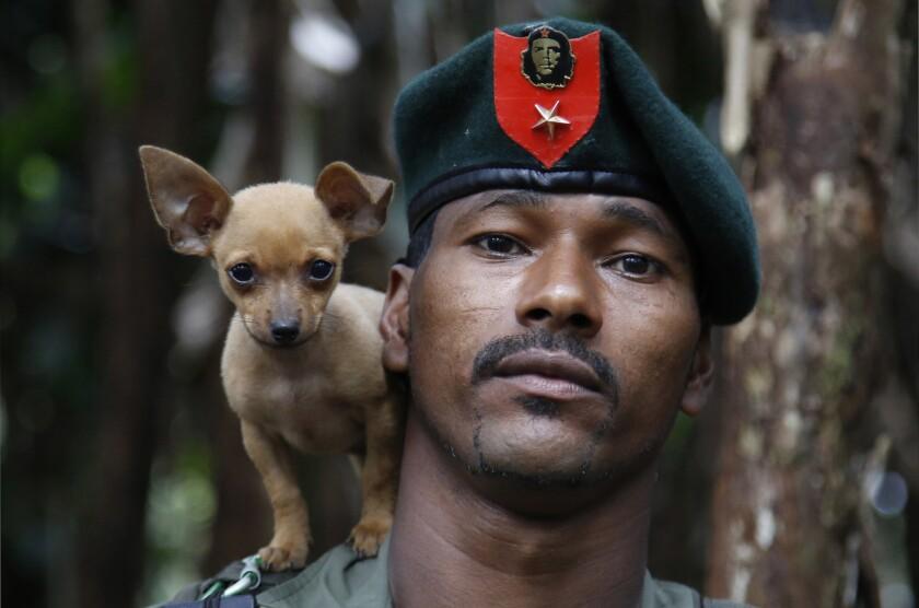En esta fotografía del 13 de agosto de 2016, un soldado insurgente del 48vo Frente de las Fuerzas Armadas Revolucionarias de Colombia (FARC) posa con su perro en las selvas del sur de Colombia. En momentos en que el conflicto de medio siglo en el país llega a su fin, con la firma de un acuerdo de paz entre el gobierno y la guerrilla, miles de rebeles de las FARC están preparándose para una vida sin armas. (AP Foto/Fernando Vergara)