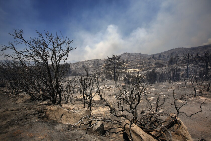 Charred landscape along Apple Canyon Road in Mountain Center