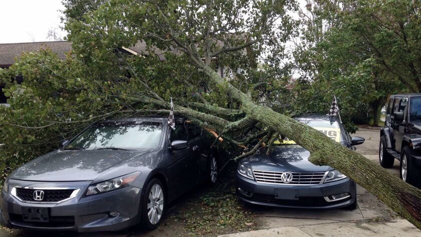 A toppled tree covers cars for sale at Demo's Auto Sales after an overnight storm Monday, Oct. 30, 2