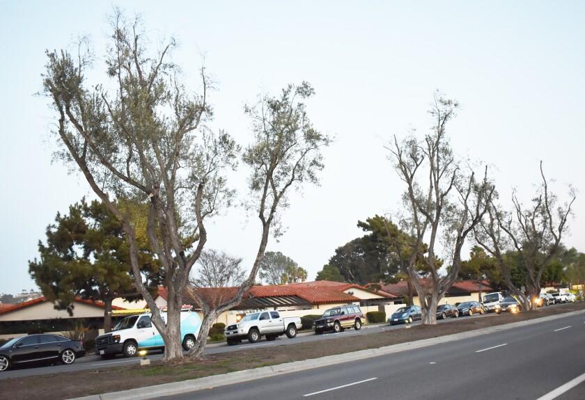 This Rancho Bernardo Road median between Acena and Bernardo Oaks drives will be getting more plants this spring.