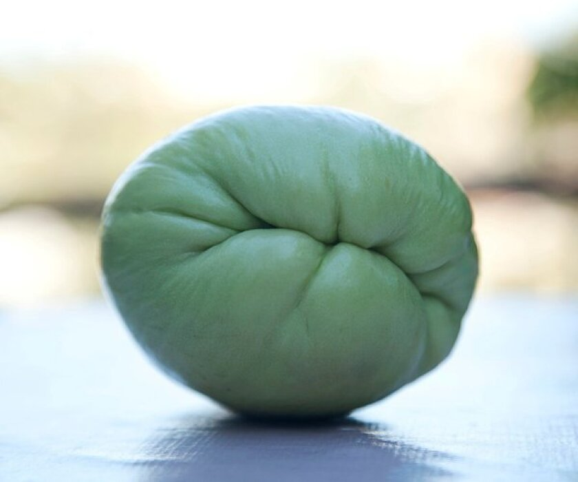 Quirky looks, fast growth, mild taste: Chayote provides many reasons for its fans to keep growing it. It's easy to get started but more difficult to control.