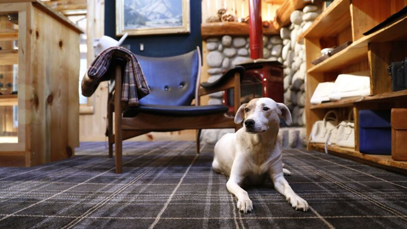 IDYLLWILD-CA-JUNE 28, 2018: Ethel, the store owner's dog, sits inside Parabellum, a new store in Idy