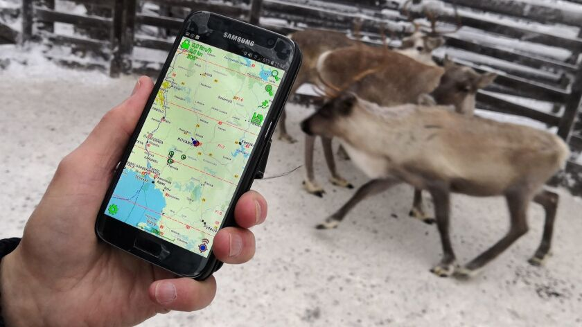 Reindeer herder Seppo Koivisto holds a smartphone, showing the mobile app used to locate reindeer in