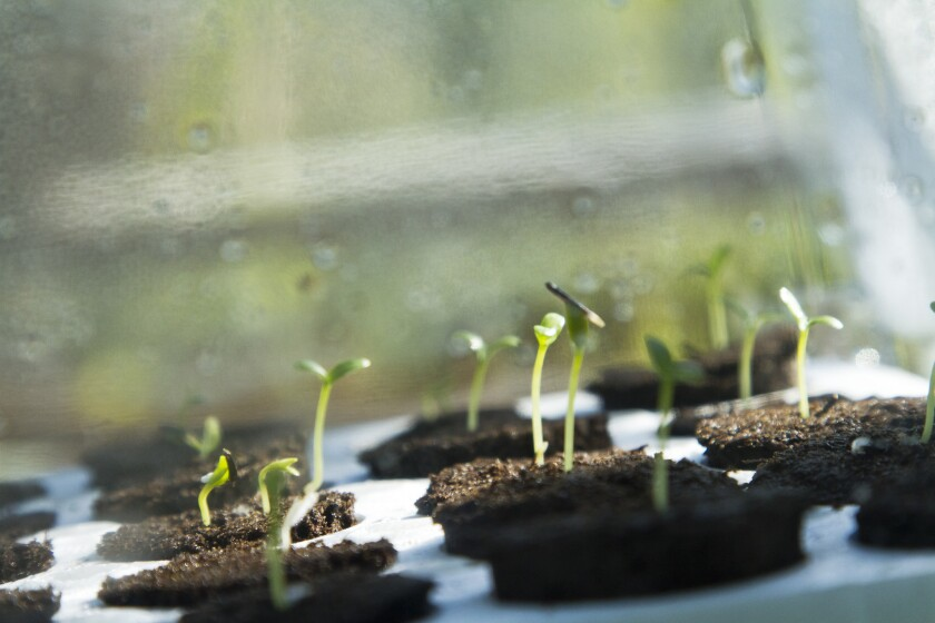 Germinate seedlings in your backyard