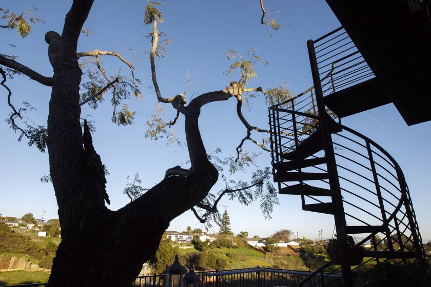 A spiral staircase leads to a viewing deck. The two-story deck at the back of the house was built around a jacaranda tree.