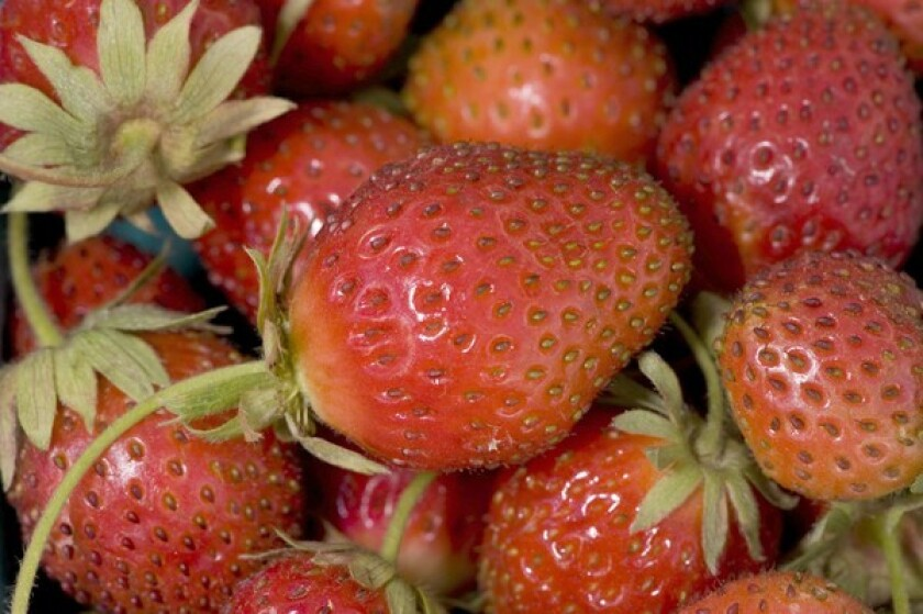 Mara des Bois strawberries, smaller, lighter-colored and with prominent seeds, are grown by Randy and Py Pudwill in Nipomo.