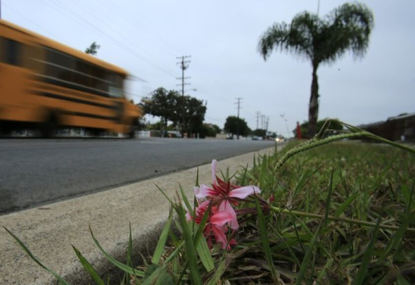 A lone flower rests in the grass where an 11-year-old girl was struck and killed by a car on Bristol Street near 10th Street in Santa Ana.