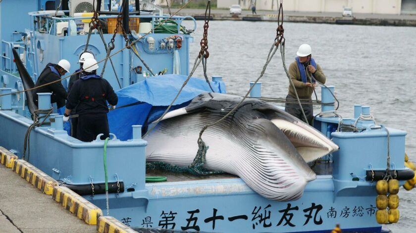 A whale is unloaded at a port in Kushiro, in the northernmost main island of Hokkaido, Monday, July