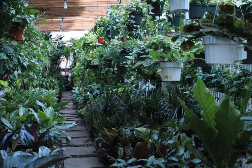 Mickey Hargitay Plants in West Hollywood.