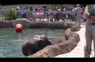 San Diego Zoo Elephant Pool Party