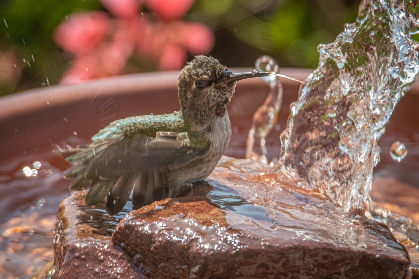 Hummer in the fountain.