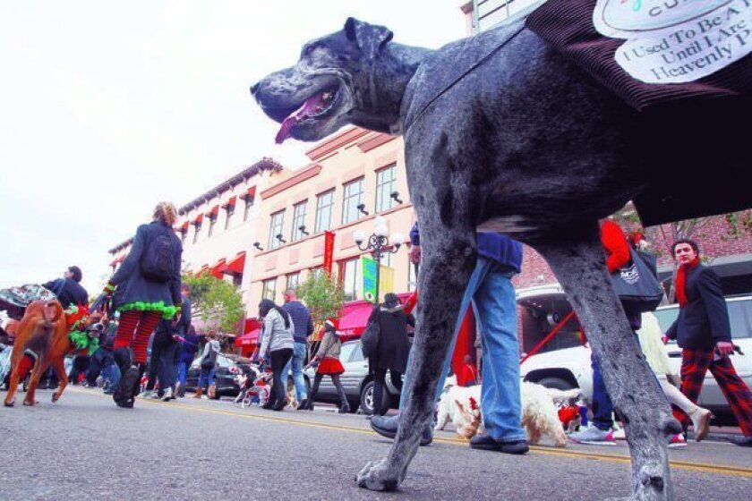 Toby, a Great Dane, marches in the Gaslamp Quarter's Holiday Pet Parade on Sunday.