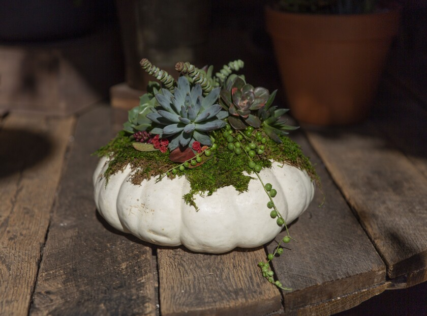 A step-by-step guide to making a gift-worthy succulent pumpkin