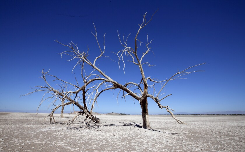 Once the Red Hill Bay part of the Salton Sea was covered with water. Now the sea bottom is open to the air, contributing to the region's health problems.