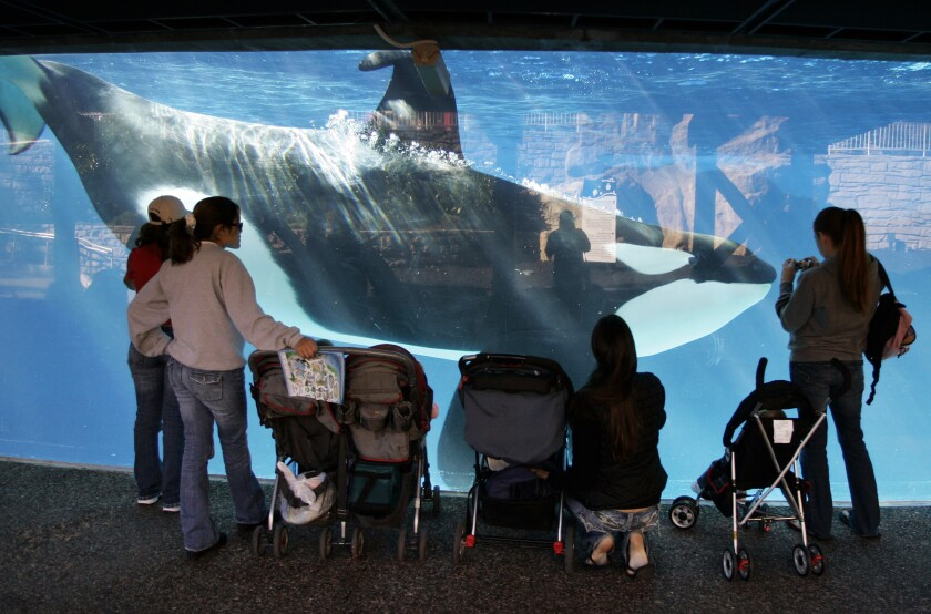 SeaWorld to phase out killer whale show