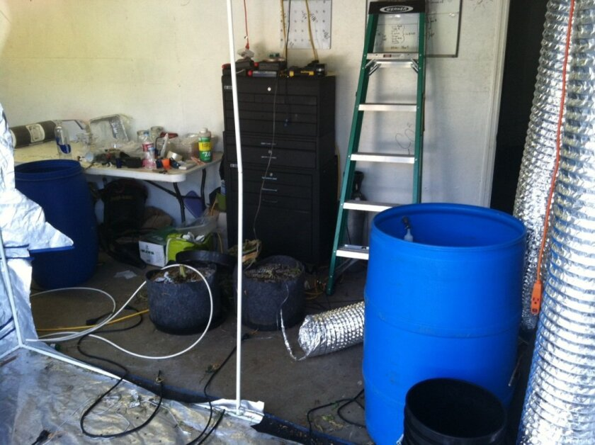 Authorities said they seized 230 marijuana plants from this Poway rental home Friday morning. Investigators suspect the site was also used as a lab to make honey oil or hash oil using pot. Such labs are potentially explosive, authorities say.