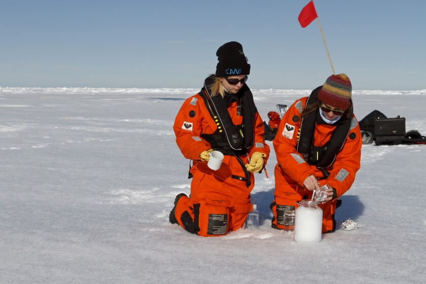 Scientists collecting snow samples from Arctic sea ice
