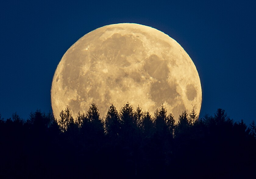 Look for the harvest moon shortly after sunset on Monday