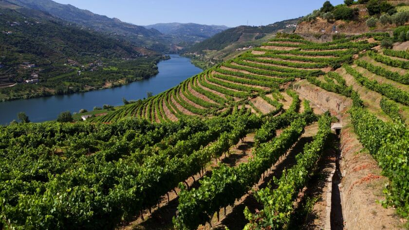 Douro wine region