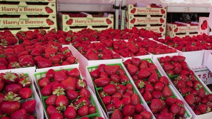 SANTA MONICA, CA-MAY 21, 2019: Chef Jean-Georges Vongerichten smells strawberries, during a visit t
