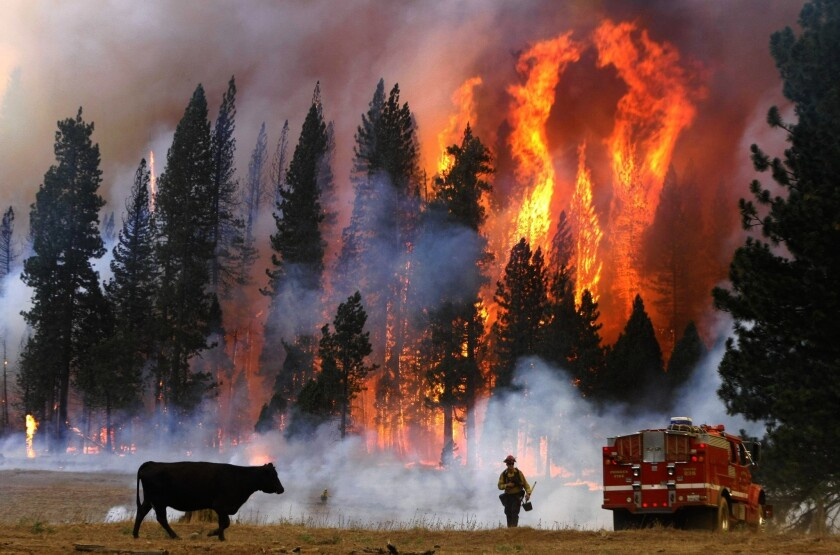 An El Dorado County firefighter moves away from flames during the Rim fire near Yosemite National Park in 2013. Because of the COVID-19 pandemic, firefighters say they will be more aggressive in keeping wildland fires small this year, but may have to do it with fewer resources.