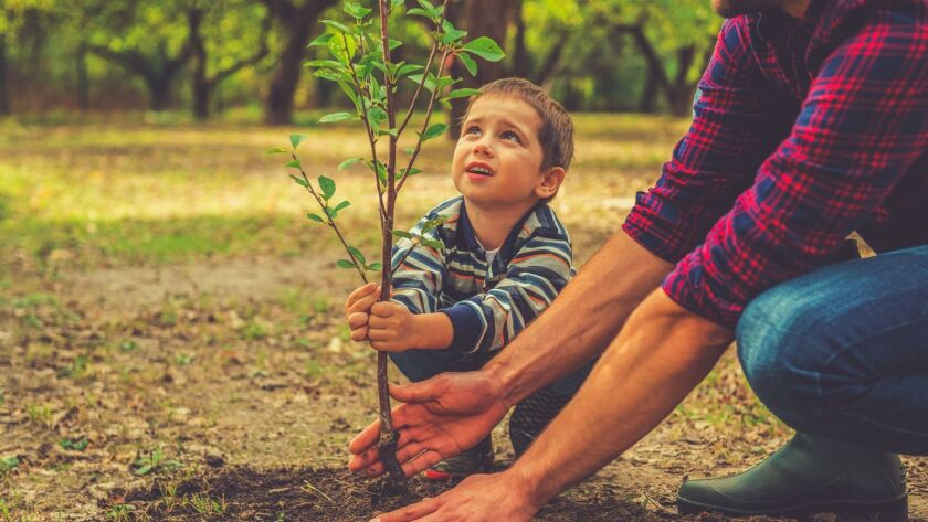 In our region, October is the ideal time to plant a tree.