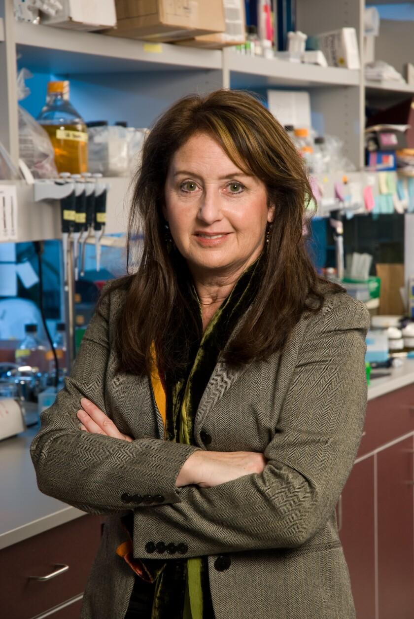 Pamela Itkin-Ansari, a Sanford Burnham Prebys adjunct associate professor