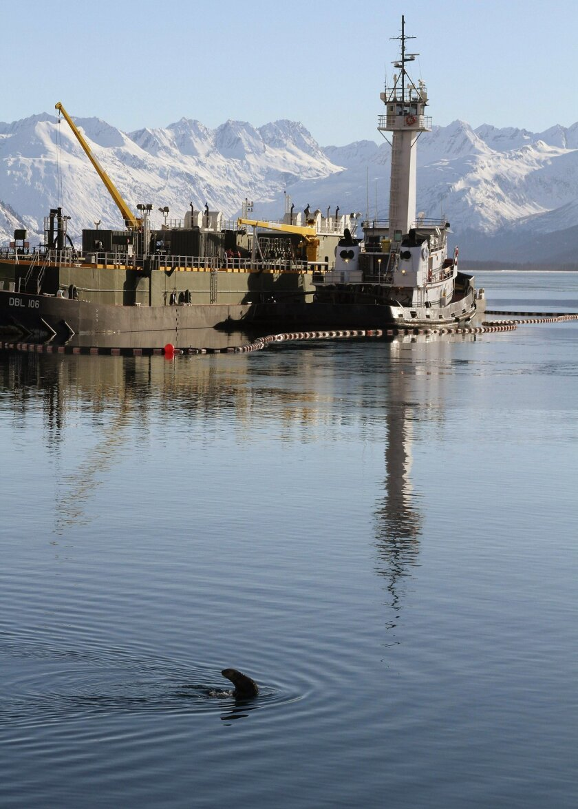 This photo taken Thursday, Feb. 27, 2014, in Valdez, Alaska, shows a sea otter in the bay near the ferry dock. The U.S. Geological Survey report released Friday, Feb. 28, 2014, concludes sea otters in Alaska's Prince William Sound have recovered to levels seen before the Exxon Valdez oil spill near