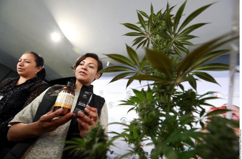 La iniciativa para regular la mariguana medicinal que podría desahogar el Senado de la República fue vista con escepticismo por un grupo de madres con hijos que necesitan de tratamiento con cannabis.