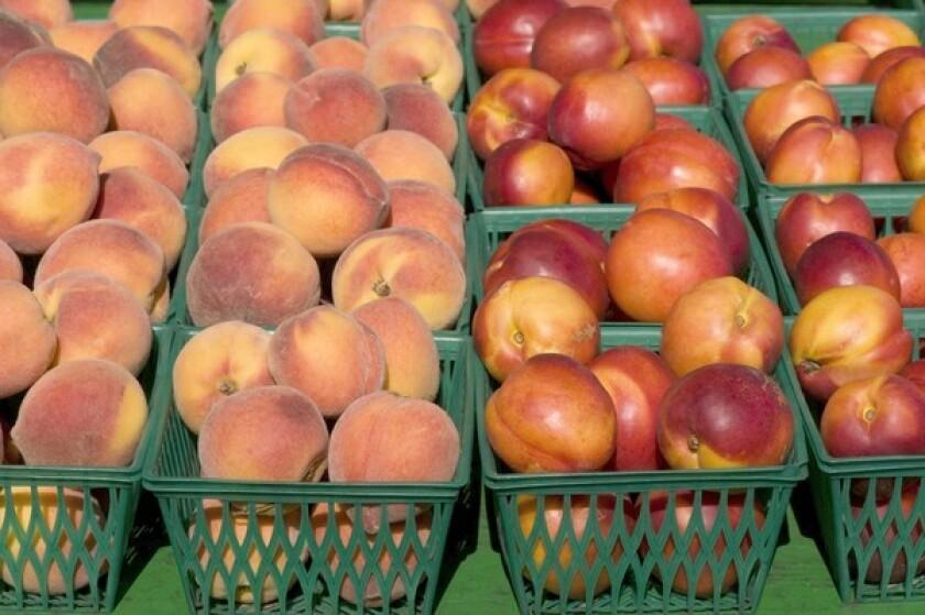 Yellow peaches and nectarines