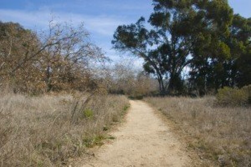 The Sycamore Trail in Gonzales Canyon.