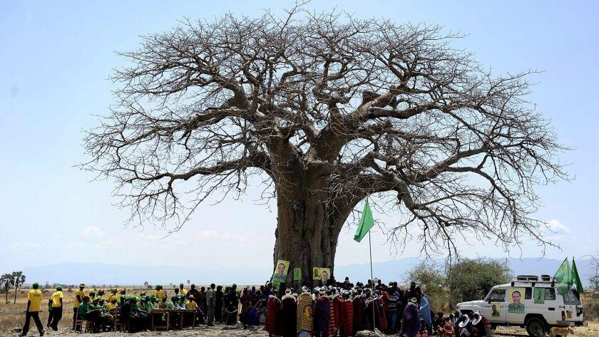 FILES-TANZANIA-BAOBAB-WILDLIFE