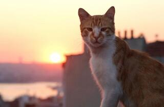 'Kedi' movie review by Kenneth Turan
