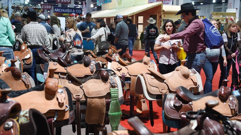 Saddles on display for the masses to ogle, and maybe purchase, at the 2015 Cowboy Christmas gift show.