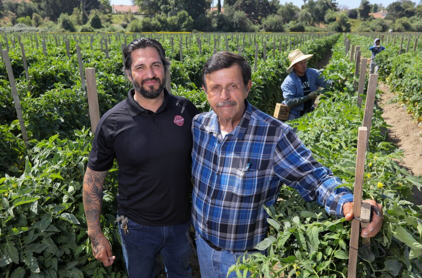 Portrait of Harry Singh Jr., at right, and his son Priya Singh, in one of the family's tomato fields. Priya is the General Manager of the company.