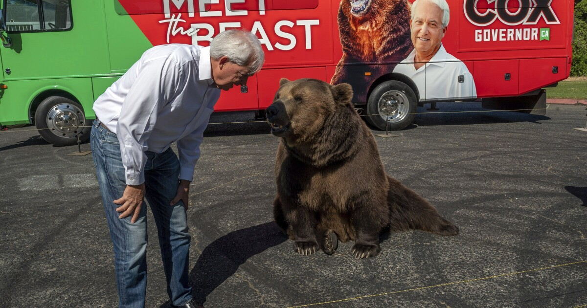 Opinion: A bear walked into a news conference. That should not have happened