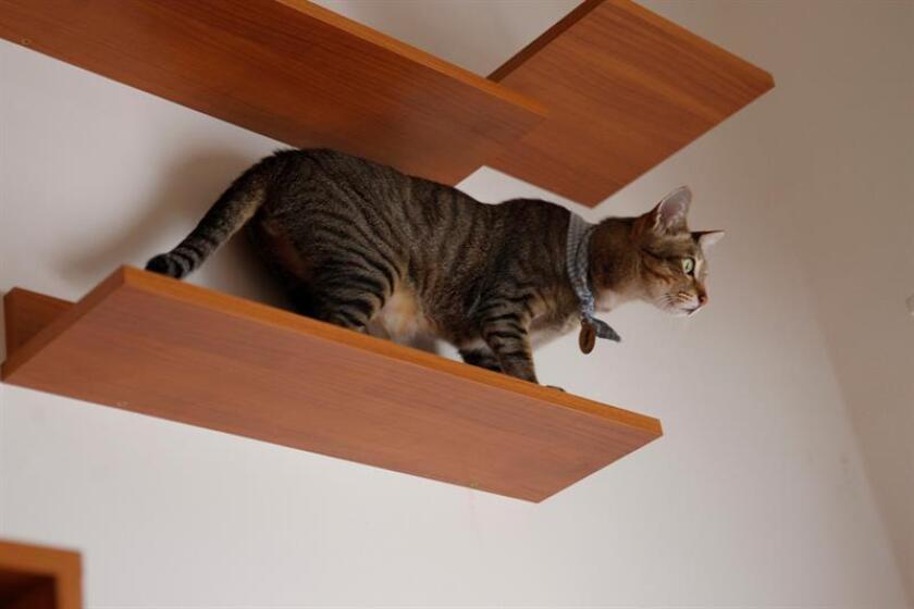 Un gato da positivo la rabia en Miami-Dade, el séptimo caso en este año