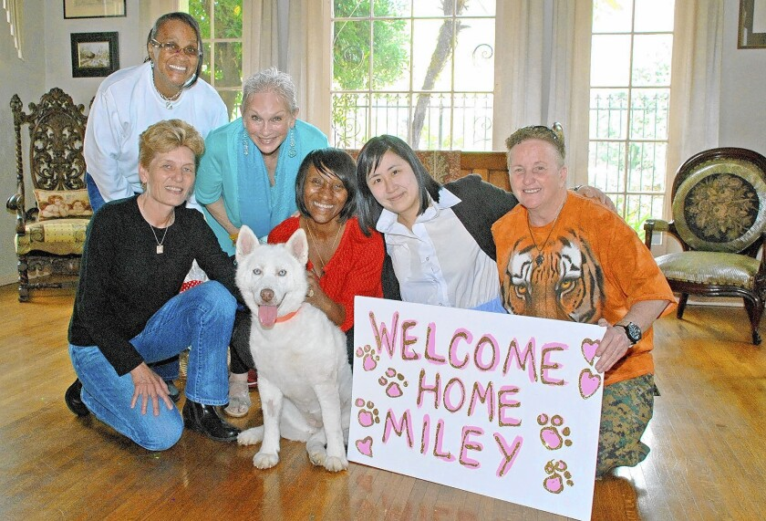 Miley, a white husky, was rescued through the organization Hope for Paws. She was adopted into the home of actress Toni Bua. Enjoying the celebration of Miley's first day in her new home are Dorothy Harrison, from left, Tammy Tennison, Toni Bua, Miley, Connie Rouse, Sheila Choi and Sandy Morris.