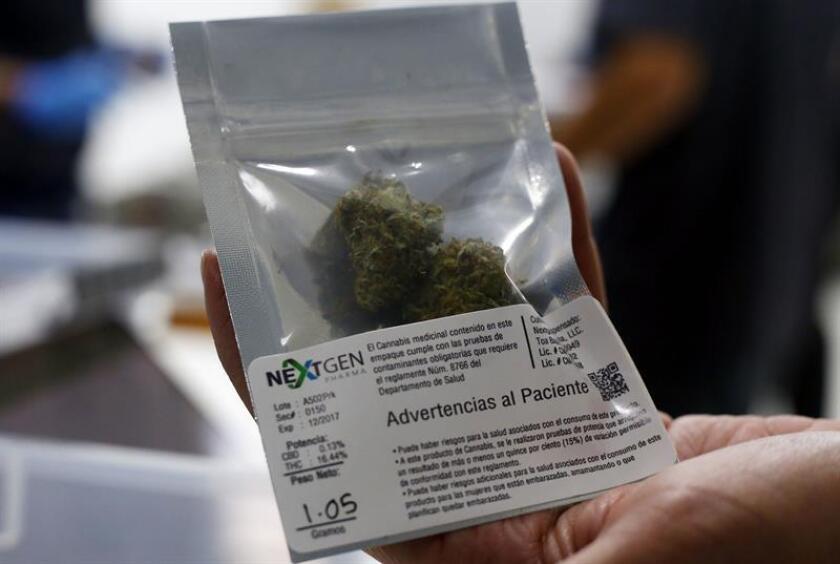 Un empleado de NextGen Pharma, uno de los primeros dispensarios de marihuana medicinal en Puerto Rico muestra una bolsa de marihuana. EFE/Archivo