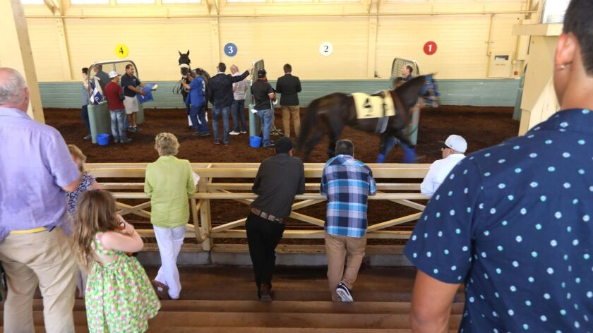 ARCADIA, CA - JUNE 23, 2019 - Horse racing fans take a look at #4 Law Abidin Citizen before the 5th