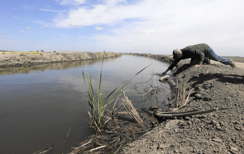 Gino Celli draws a water sample to check salinity in irrigation water in a canal running through his fields. He draws water from the Sacramento-San Joaquin River Delta