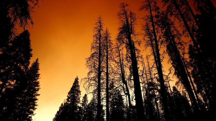 Trees shrouded in smoke from the Ferguson Fire, which burned more than 96,000 acres near Yosemite National Park. A state assessment found climate change will make Sierra Nevada forests more susceptible to wildfires.