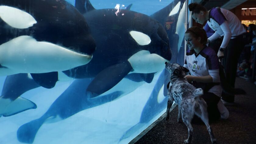 SeaWorld uses playful otters, killer whales and giant sea turtles to reconnect with visitors