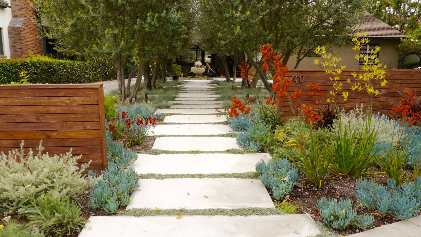 A large front yard covered with Bermuda grass and weeds was swapped for water-wise UC Verde buffalo grass, concrete pavers and drought-tolerant plants. See what it looked like before here.